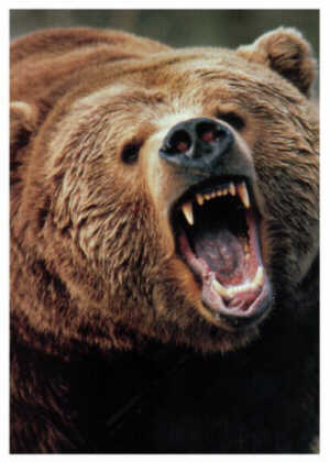 ...me, I go grizzly and retreat to my den.